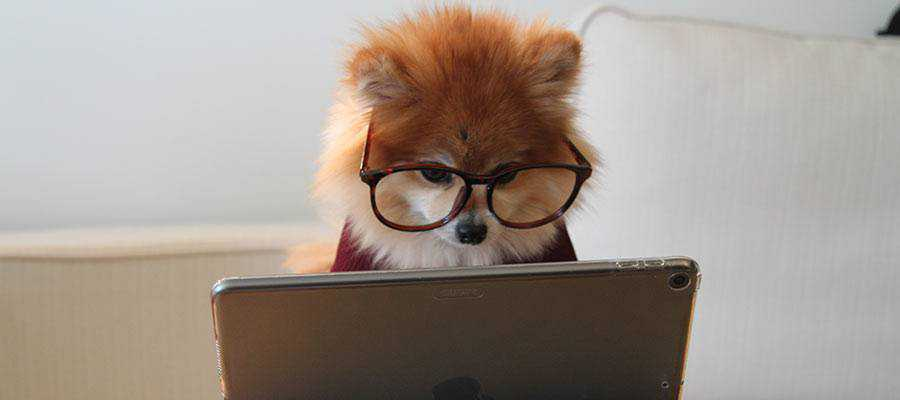A dog looking at a computer screen.