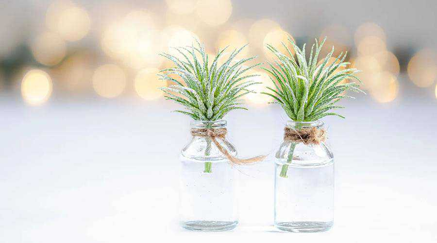 Plants in Bottled Water lights bokeh photography inspiration