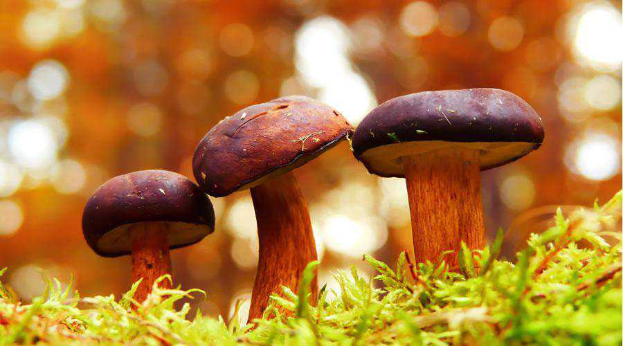 Fungi in Forest lights bokeh photography inspiration