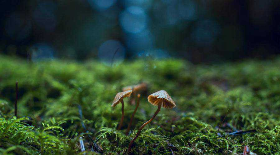 Close-Up Photo of Mushrooms lights bokeh photography inspiration