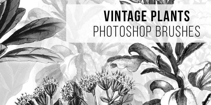 vintage free Plant Photoshop Brushes ABR