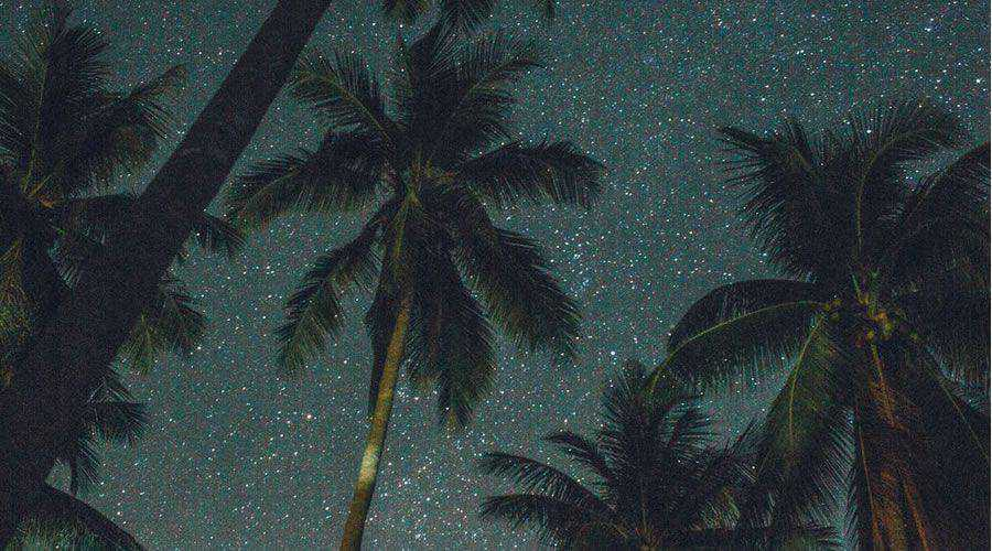 Palm Trees Stars desktop wallpaper hd 4k high-resolution