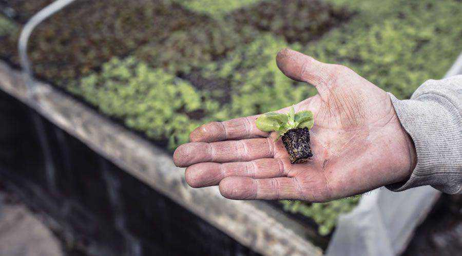 Miniature Plant in Hand desktop wallpaper hd 4k high-resolution