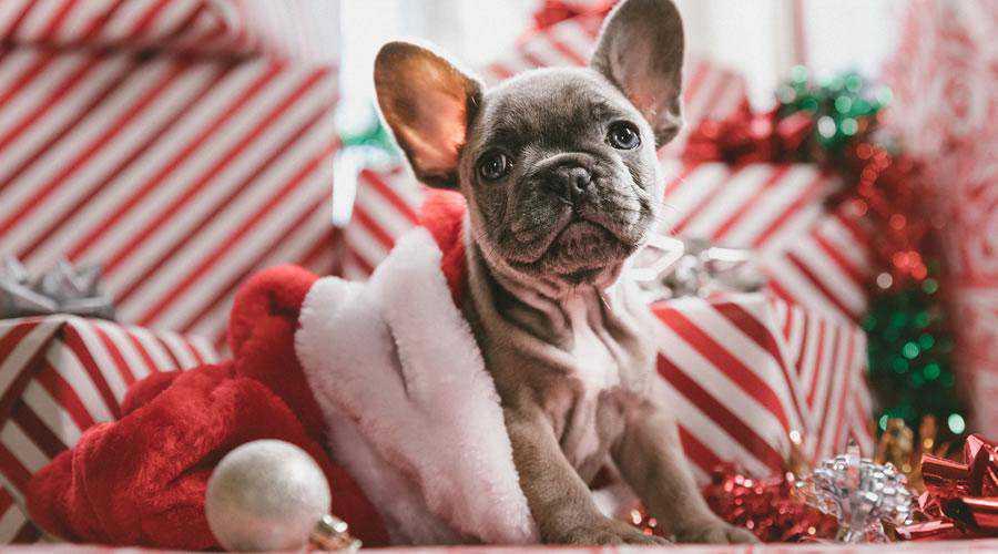 Puppy in Santa Hat christmas hd wallpaper desktop high-resolution background