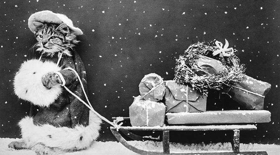 Vintage Santa Cat Photo christmas hd wallpaper desktop high-resolution background