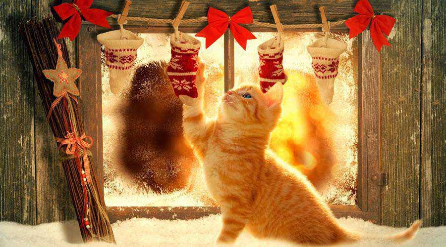 Cat Christmas Stockings hd wallpaper desktop high-resolution background