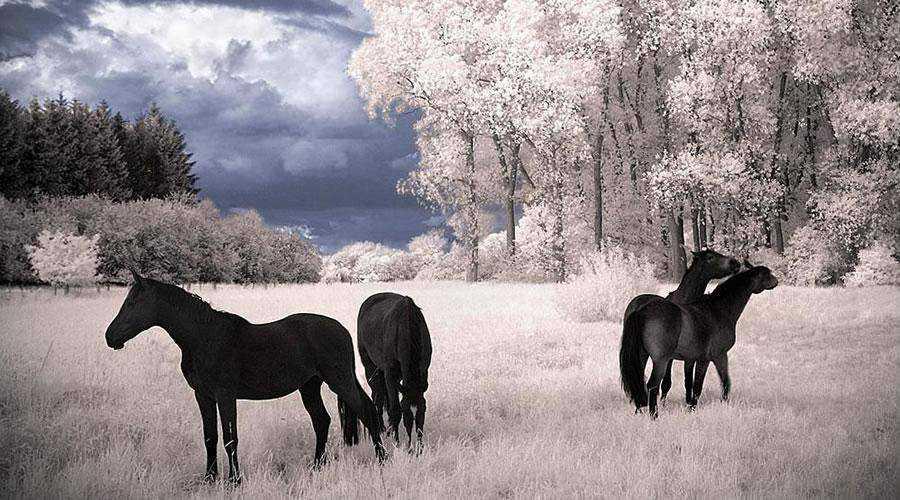 shot infrared Horses Dreams Infrared inspiration
