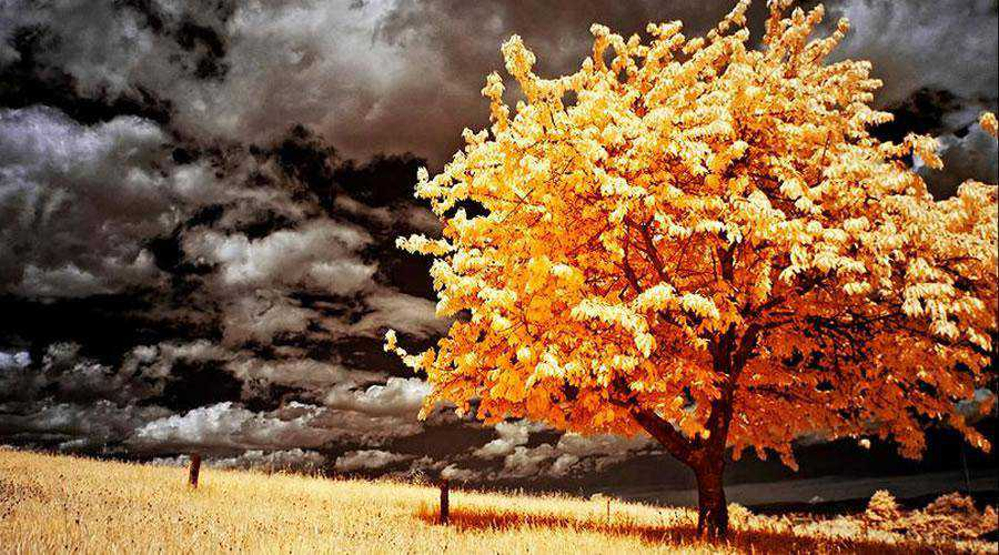 infrared photography Infrared Landscape inspiration