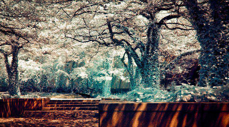 infrared photography Summer or Winter inspiration