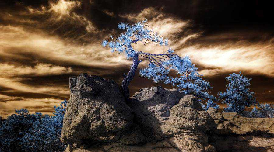 infrared photography Infrared HDR Palmer Park Colorado Springs inspiration