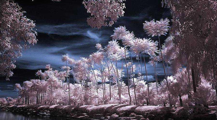 infrared photography Tropical Garden Infrared inspiration