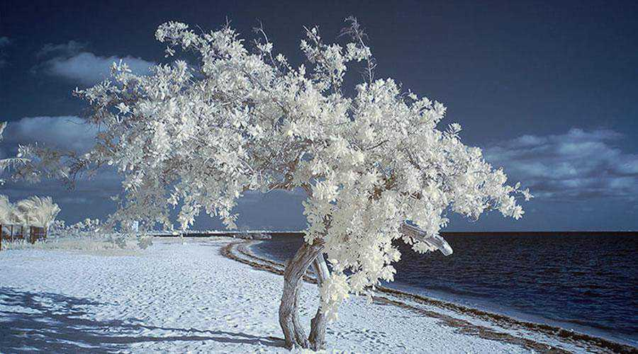 shot infrared By the Sea inspiration