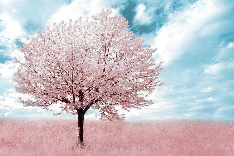 30 Beautiful Examples of Infrared Photography