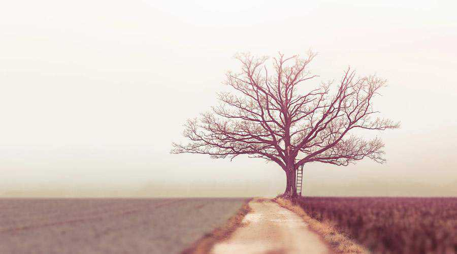 Bare Tree minimal minimalistic desktop wallpaper hd 4k high-resolution