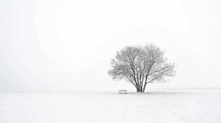 Barren Tree in Winter minimal minimalistic desktop wallpaper hd 4k high-resolution
