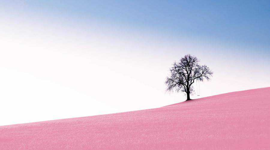 Tree on Pink Grass minimal minimalistic desktop wallpaper hd 4k high-resolution