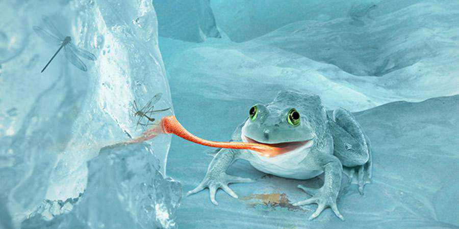 Fictional Arctic Snow Frog Photoshop