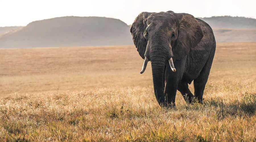 Elephant in Kenya photographer widlife photography inspirational