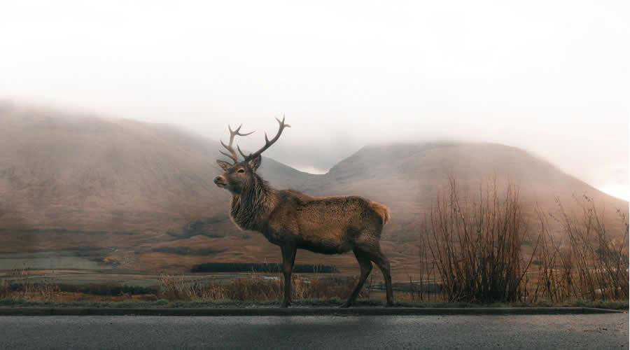Deer in the Fog photographer widlife photography inspirational