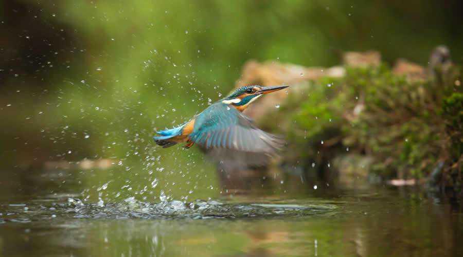 Kingfisher Flying photographer widlife photography inspirational