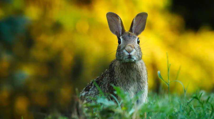 Rabbit Looking photographer widlife photography inspirational