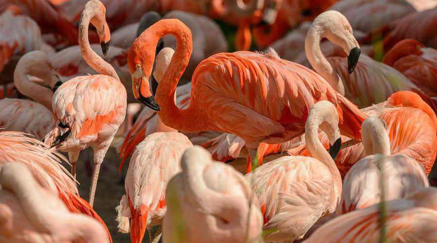Pink Flamingos photographer widlife photography inspirational