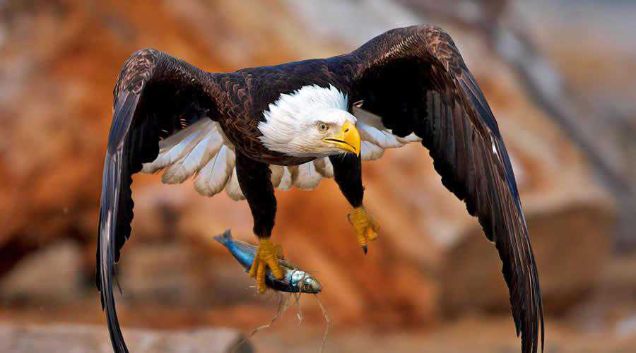 Eagle Catching Fish photographer widlife photography inspirational