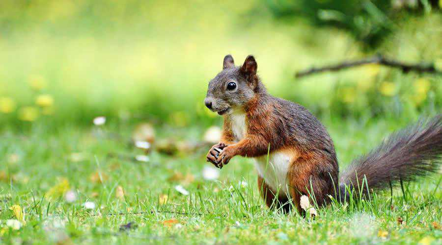 Squirrel on Grass photographer widlife photography inspirational