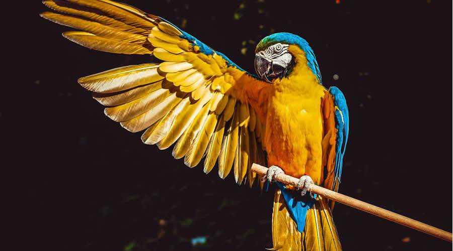 Yellow & Blue Macaw photographer widlife photography inspirational