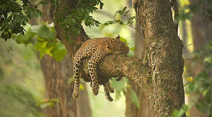 The Sleeping Beauty photographer widlife photography inspirational