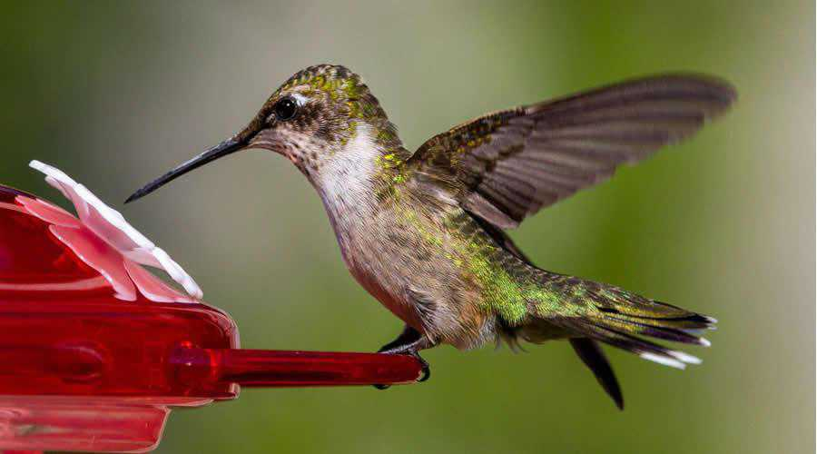 Hummingbird photographer widlife photography inspirational