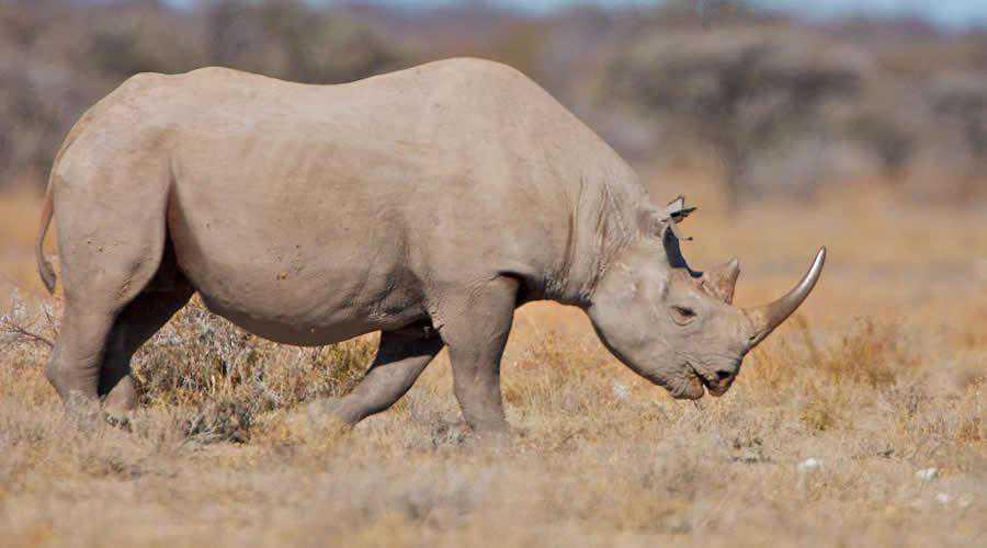 Rhino in Etosha Park photographer widlife photography inspirational