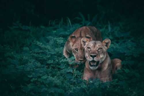 30 Stunning Examples of Wildlife Photography